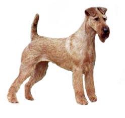 Thomas Terriers Irish Terrier